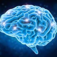 Healthy Byte: Nutrition Choices & Alzheimer